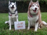 I will take a picture of my Siberian Husky with your sign